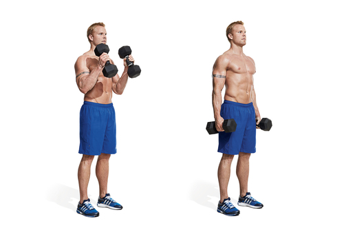 Show img hammer curl exercisefor biceps and forearms