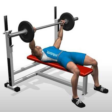 Show img 101 flat barbell bench press chest